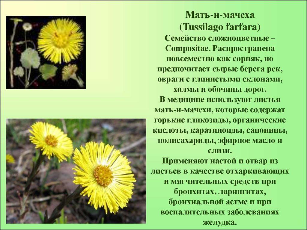 Слабительные лекарственные растения реферат 2868