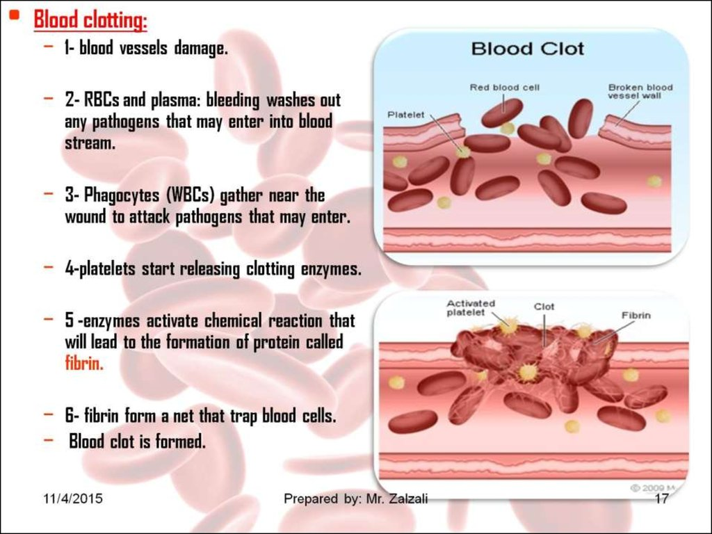 blood clotting enzyme essay