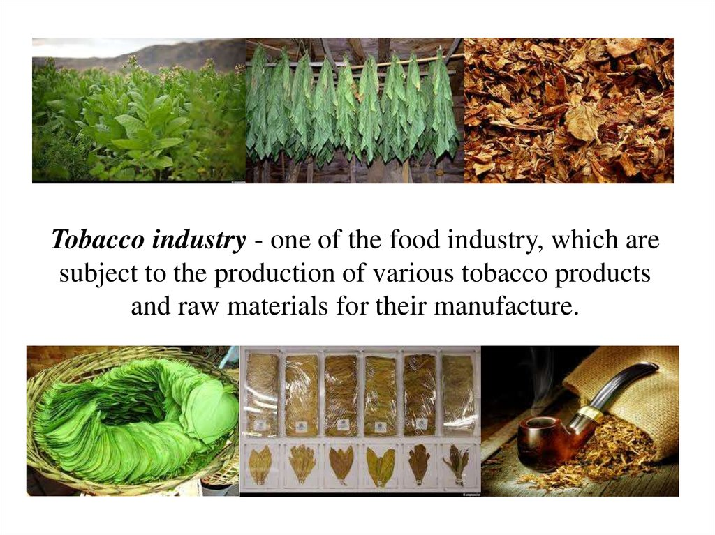 Plant industrial fermented Tobacco