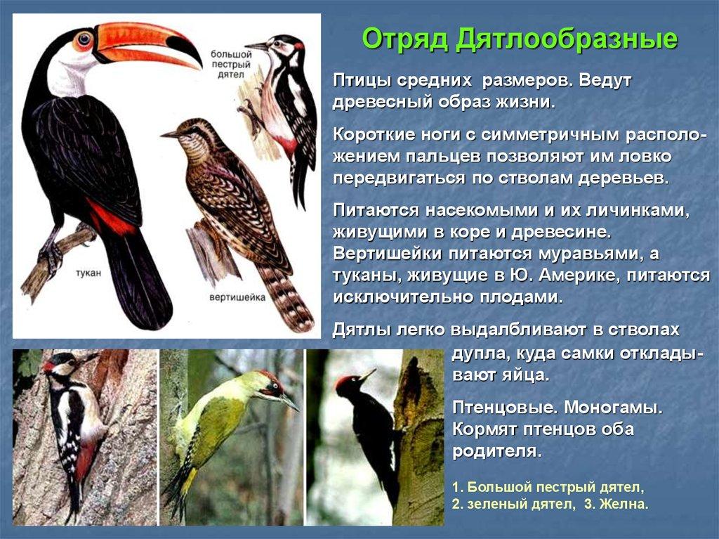 вас птицы дрофа дятел и стриж инциклопедия вечерних