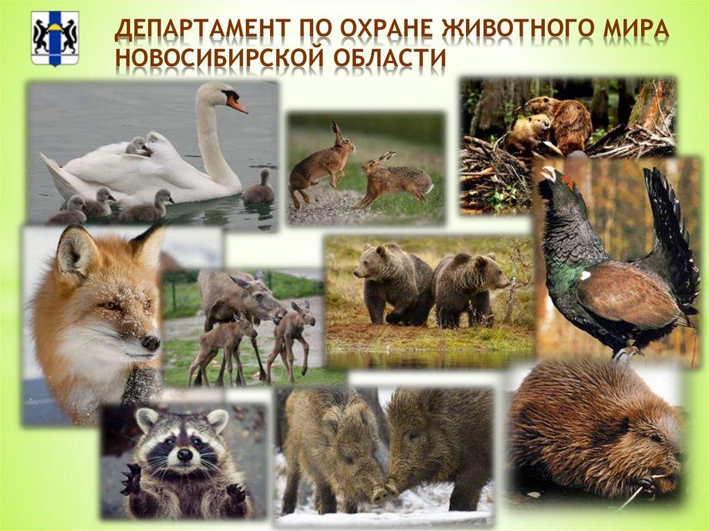 картинка охраняемые животные знания древних