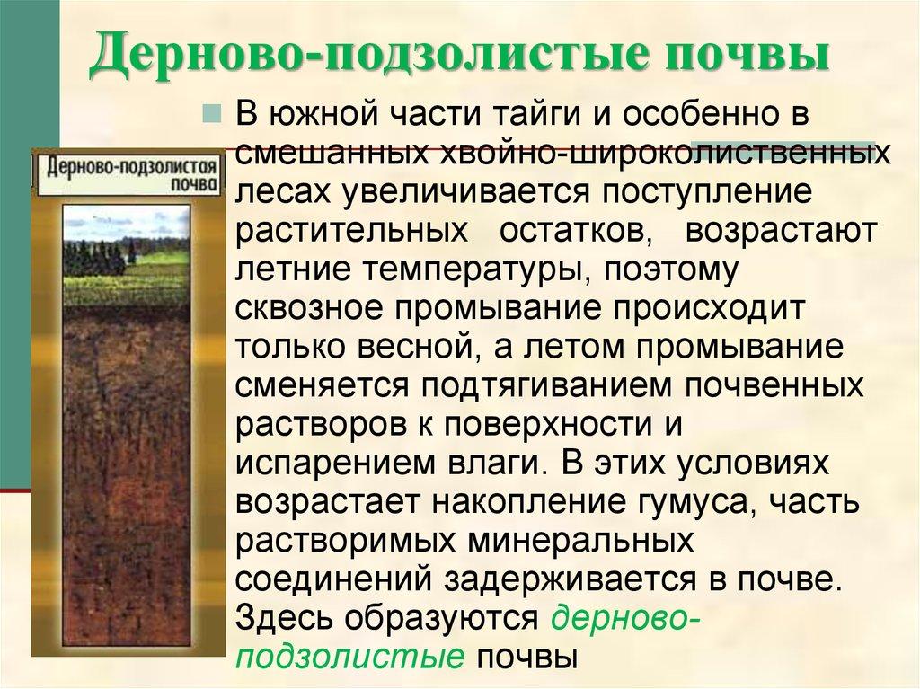 том подзолистые почвы образуются в функциональное