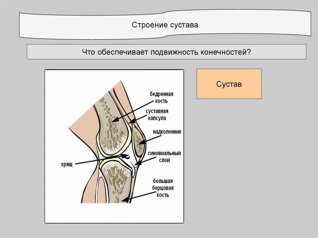Что обеспечивает подвижность сустава эндопротезирование тазобедренного сустава казань цены