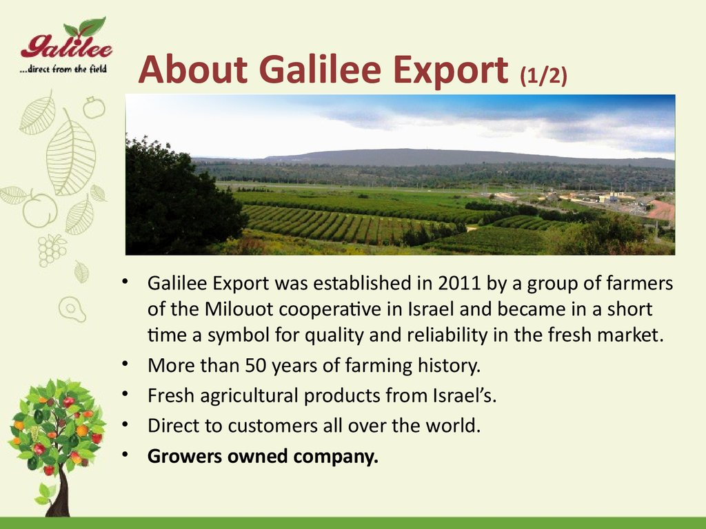 About Galilee Export (1/2)