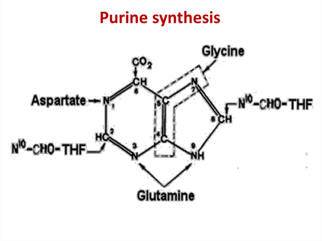 Purine synthesis