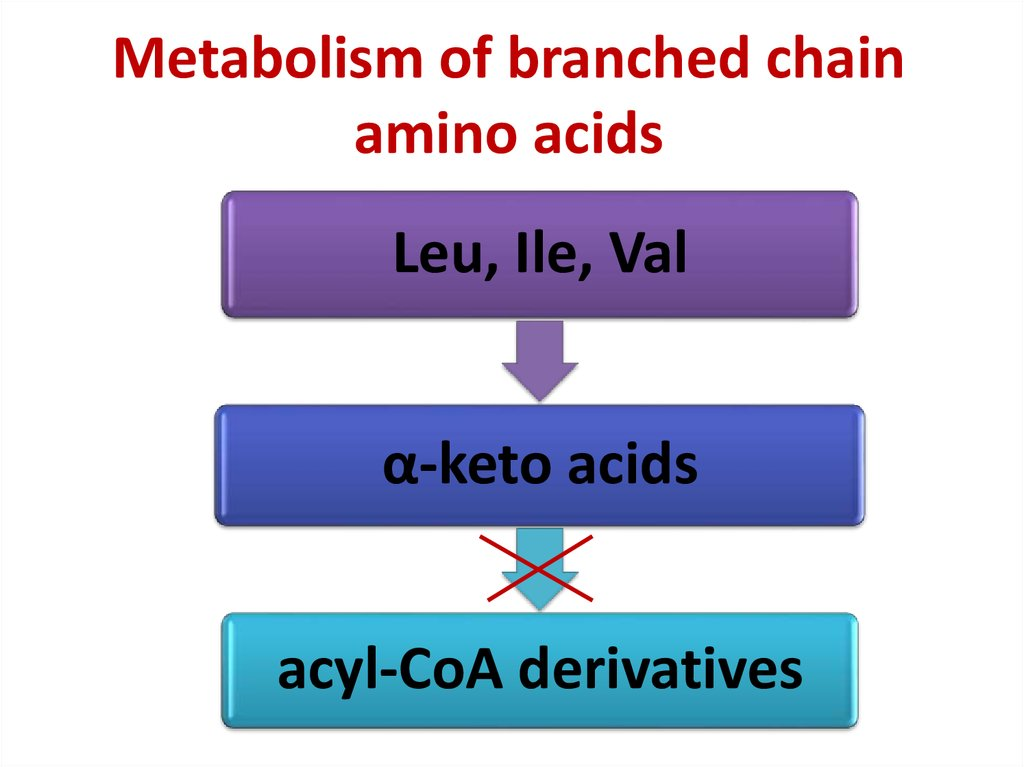 Metabolism of branched chain amino acids