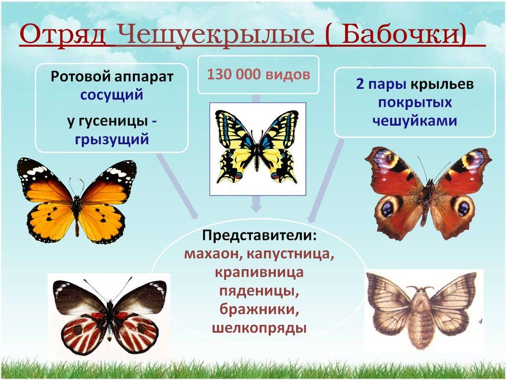 Вкладыш открытку, картинки про бабочек с названиями