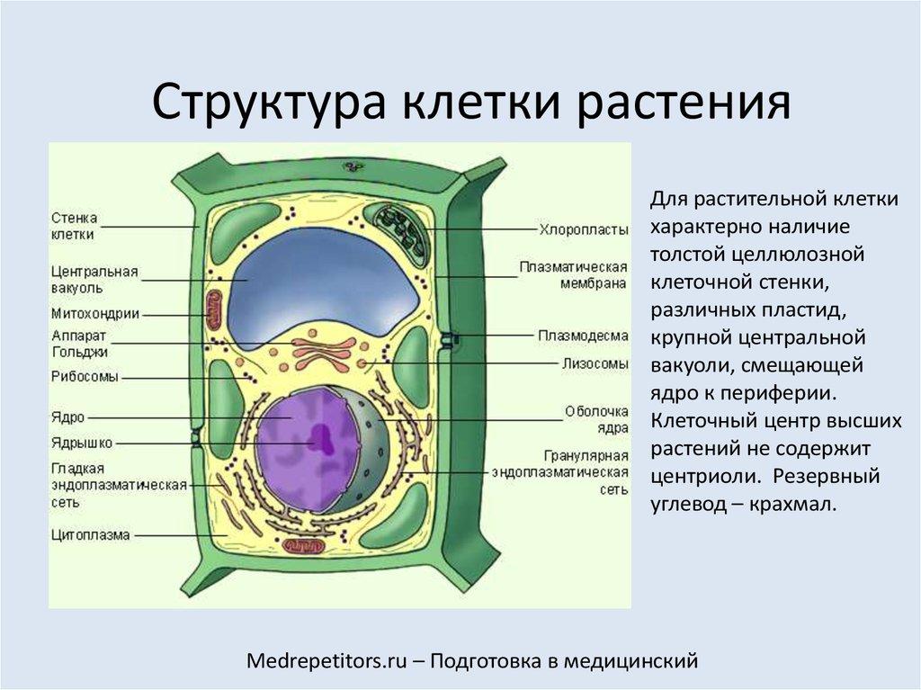 наше клетка растения названия суворовское училище