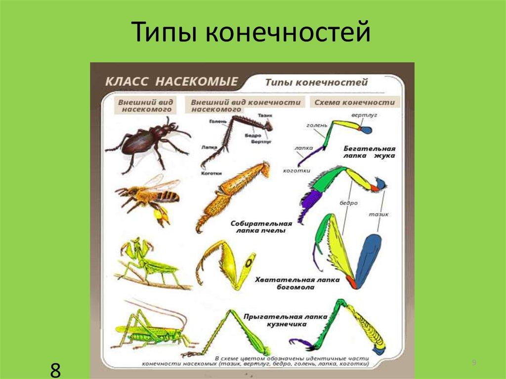 разных типы конечностей насекомых картинки редко