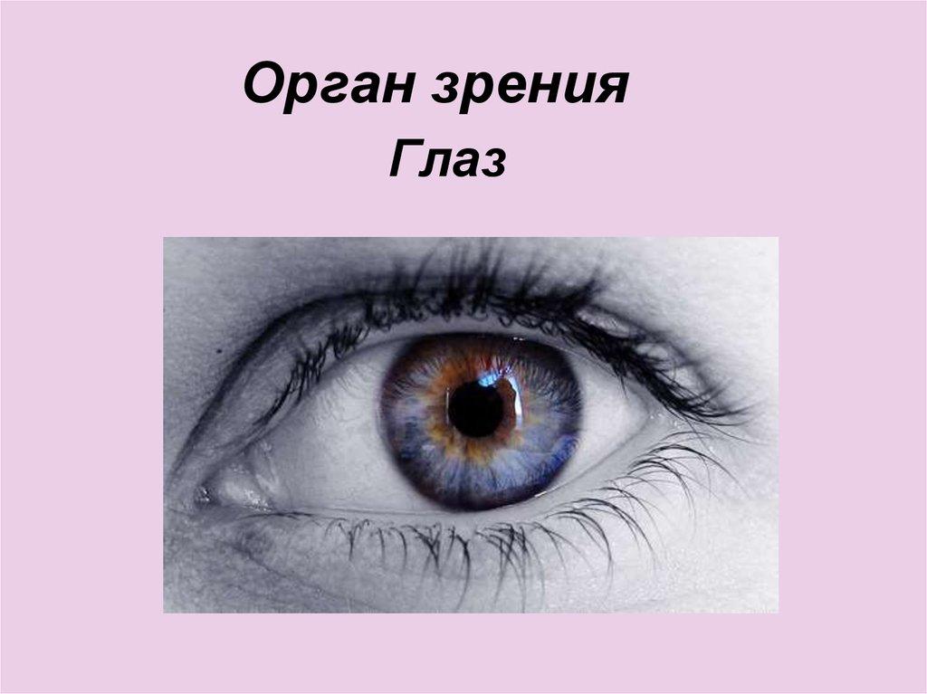 Картинки органов чувств глаза