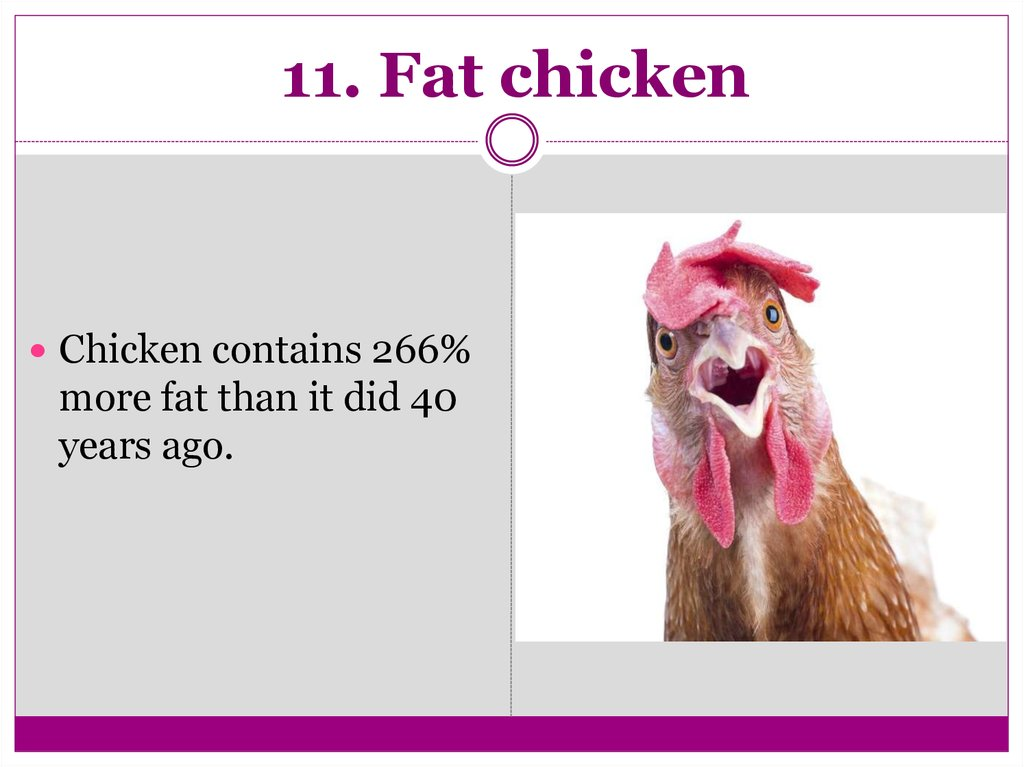 11. Fat chicken