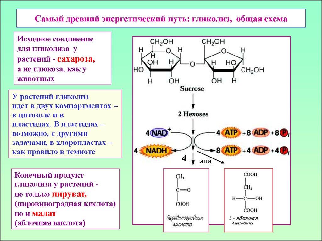 Схема фотосинтеза 5 класс фото 944