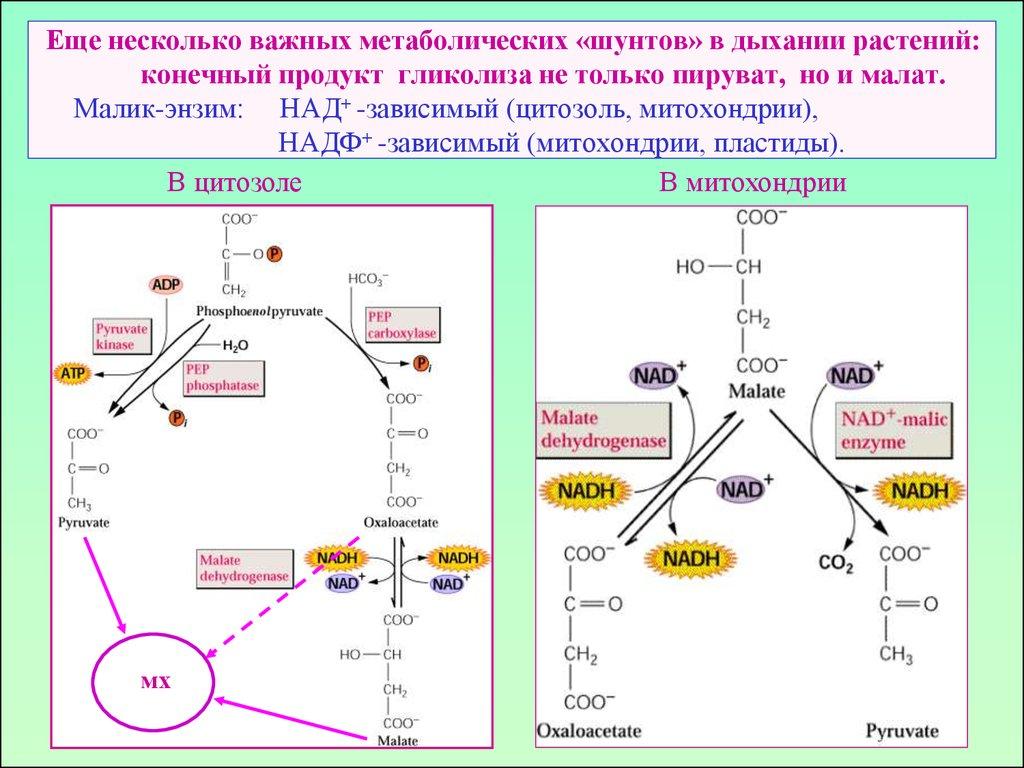 Схема фотосинтеза 5 класс фото 420