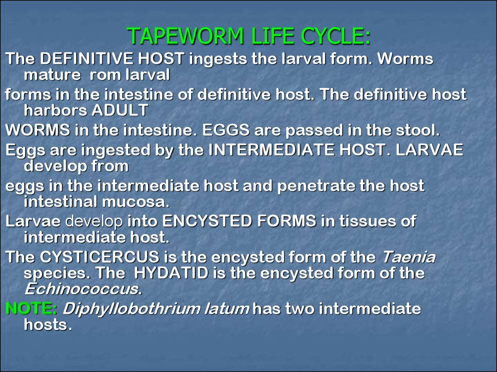 TAPEWORM LIFE CYCLE: