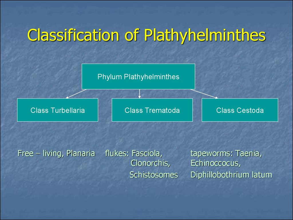 Classification of Plathyhelminthes