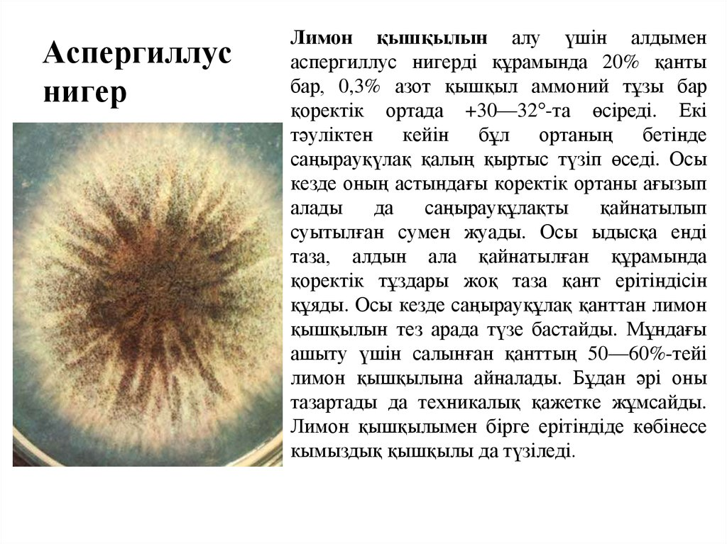 research paper aspergillus niger Full length research paper potential of using aspergillus niger in the biodegradation of lubricating oil published by basic research journal of microbiology.