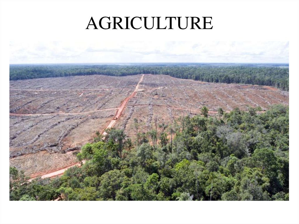 deforestation research paper Many people have failed to recognize problems of deforestation such inclinations have led to increased deforestation which comes with many problems.