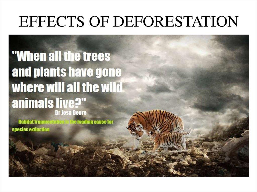 deforestation  agriculture