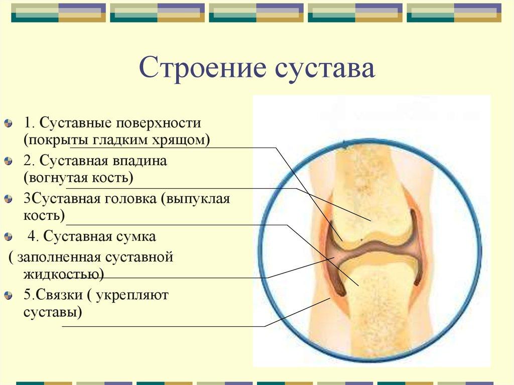Чем покрыты суставные поверхности костей боли в челюстно-лицевом суставе