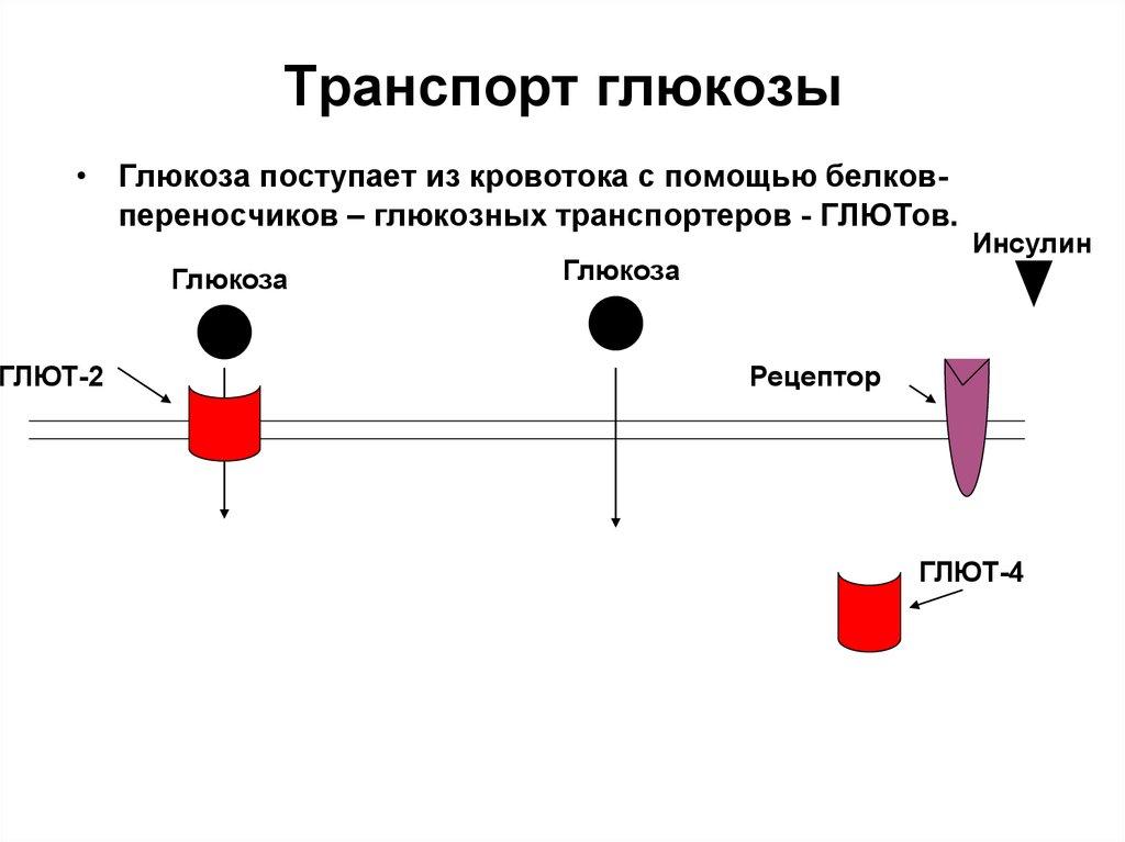 Транспортер глюкозы в клетке фольксваген транспортер как на нем ездить
