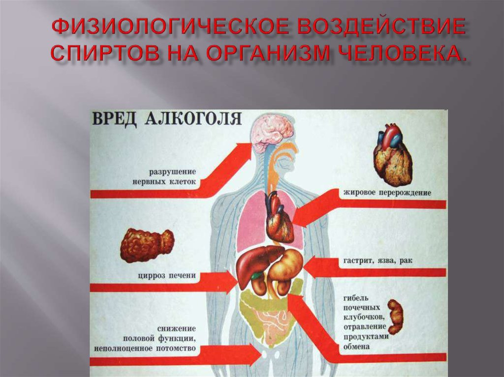 Физиологическое действие спиртов на организм человека