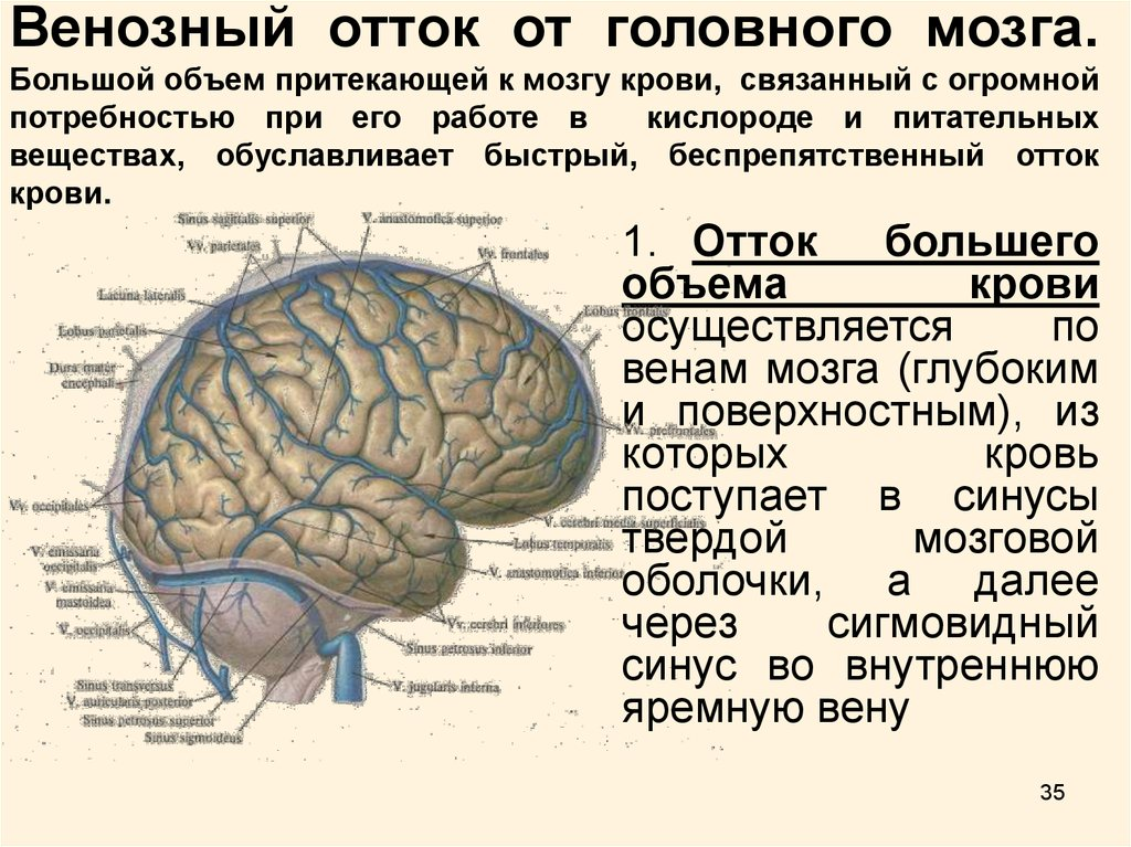 Затруднение венозного оттока головного мозга лечение