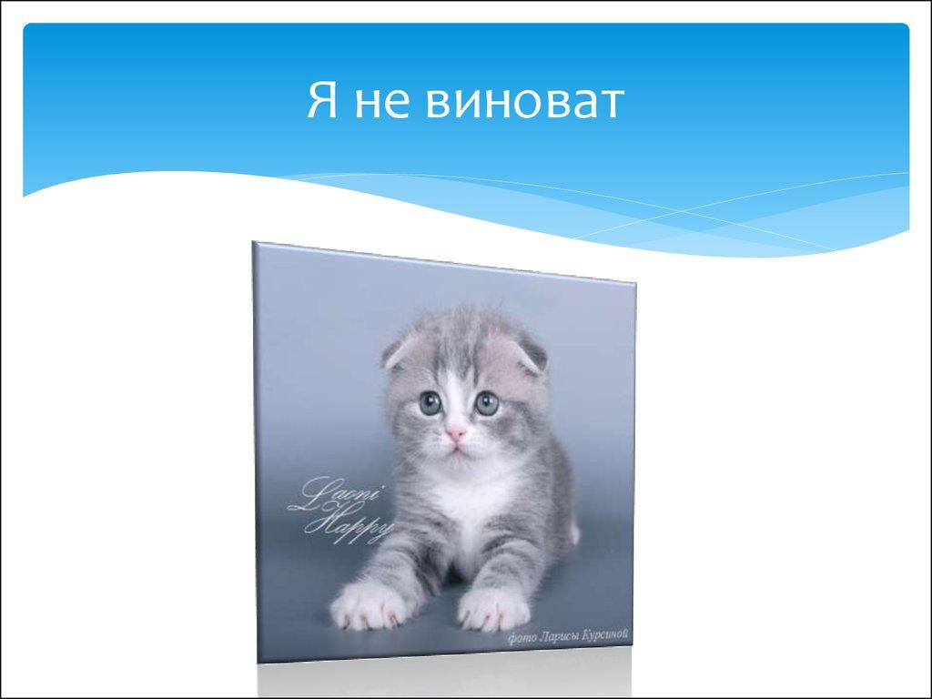 картинки котики презентация