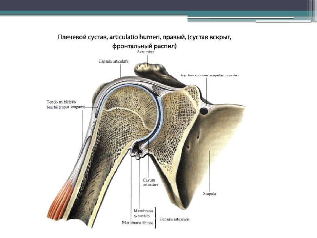 Артроскопия крупных суставов артроз коленного сустава обезболивание