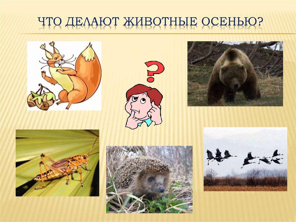 фото картинка что делают животные такая