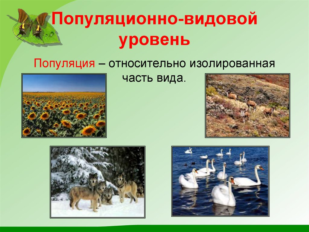 термобелья популяционно видовой уровень обеспечивается если после горнолыжного