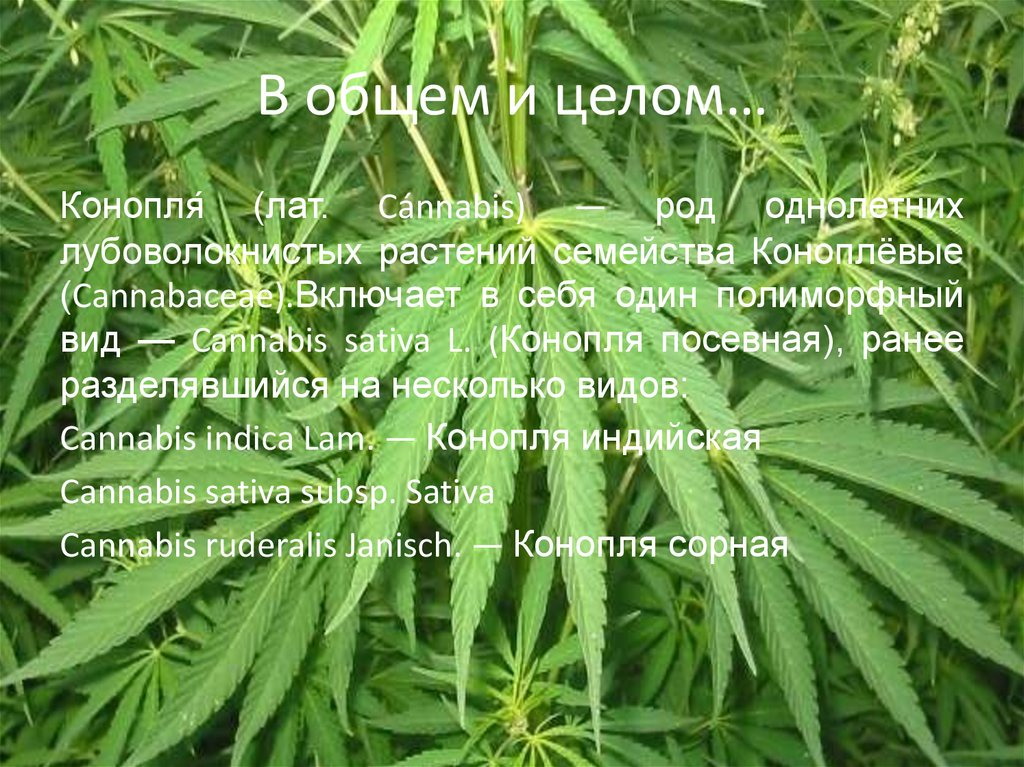 Конопля описание и фото марихуана в чем вред