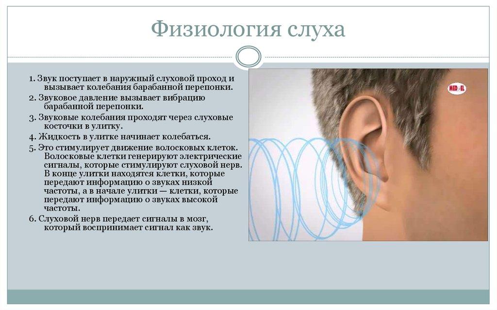У органов шпаргалки физиология слуха детей патология и анатомия,