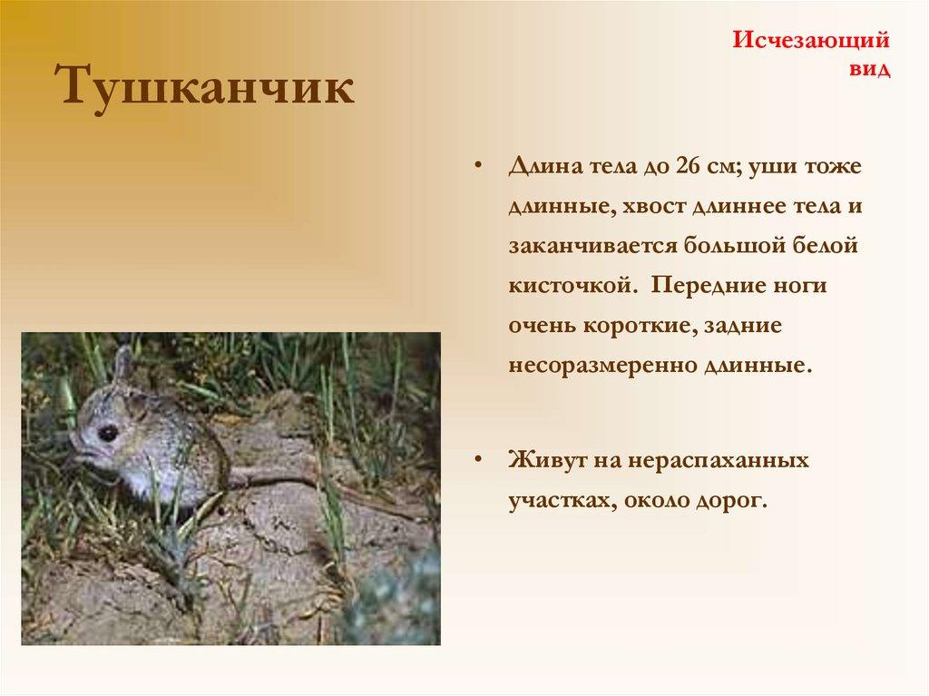 Достопримечательности кирова фото и описание свойства