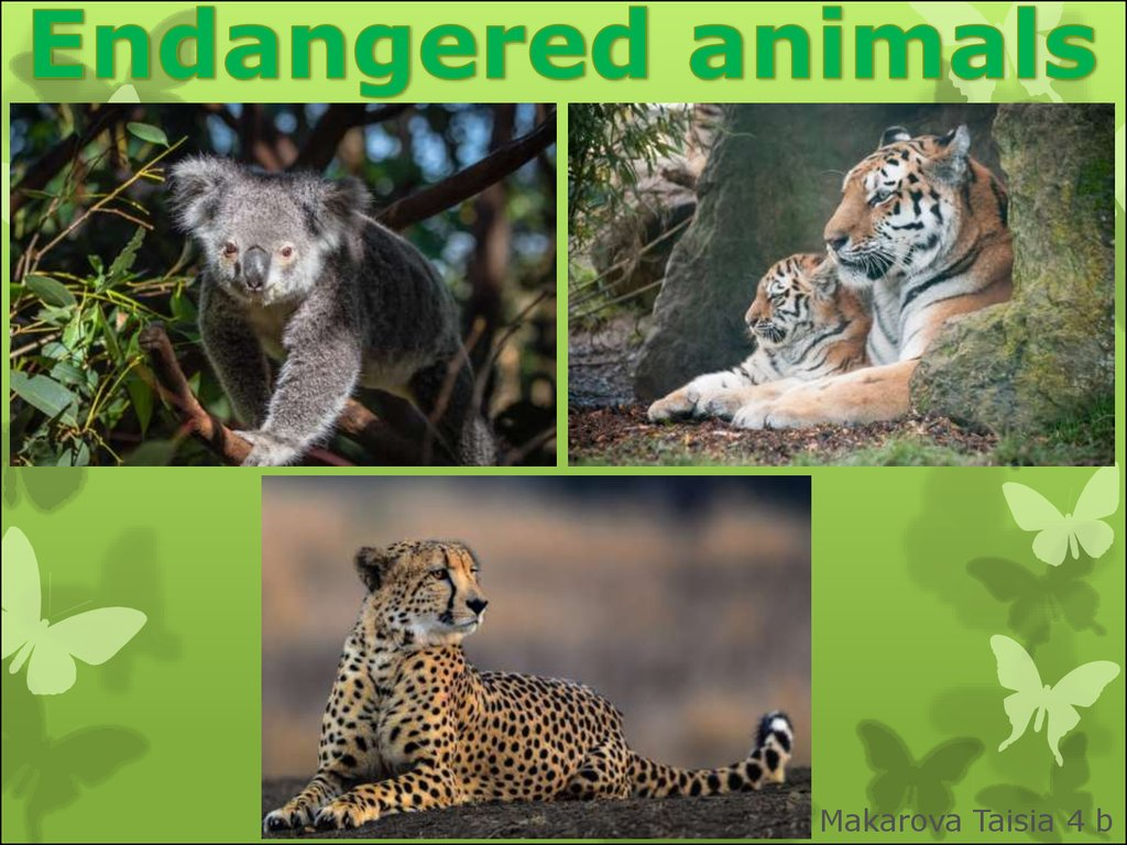endangered animals Students will read short passages focusing on different endangered animals and answer questions your students will read short passages to learn about specific animals, and answer either multiple.