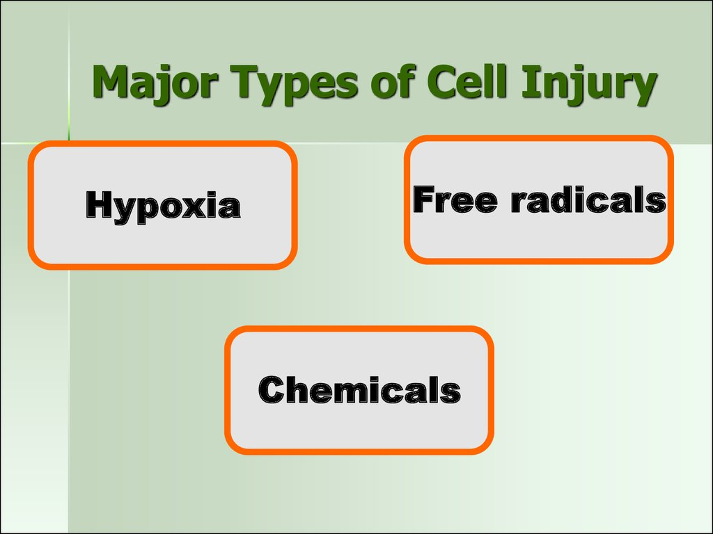 Major Types of Cell Injury