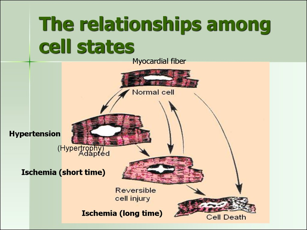 The relationships among cell states