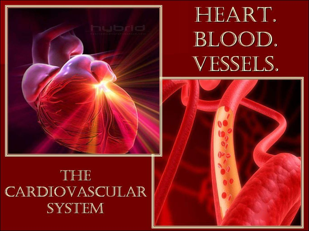 Individual Work On Cardiovascular System