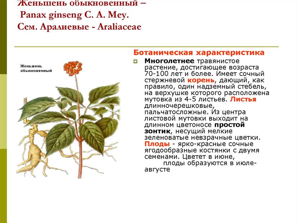 Для кратко шпаргалки женьшень растение