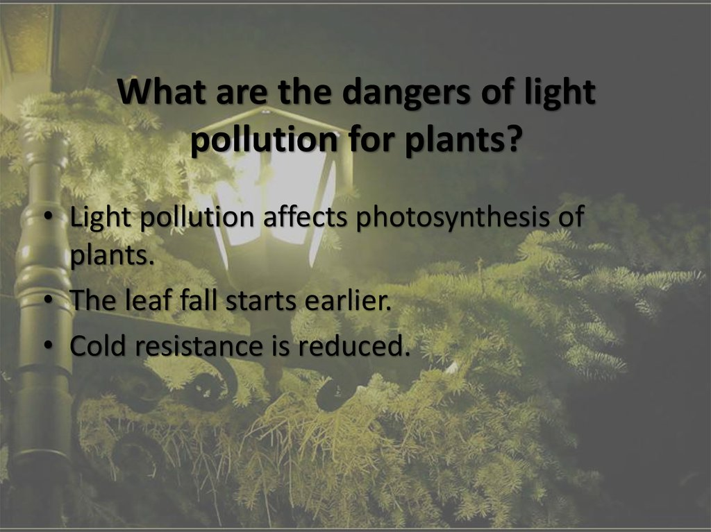 what is light pollution Not only does light pollution affect people, it also changes the behavior in animals and insects because there is so much light at night, safety is also decreased.