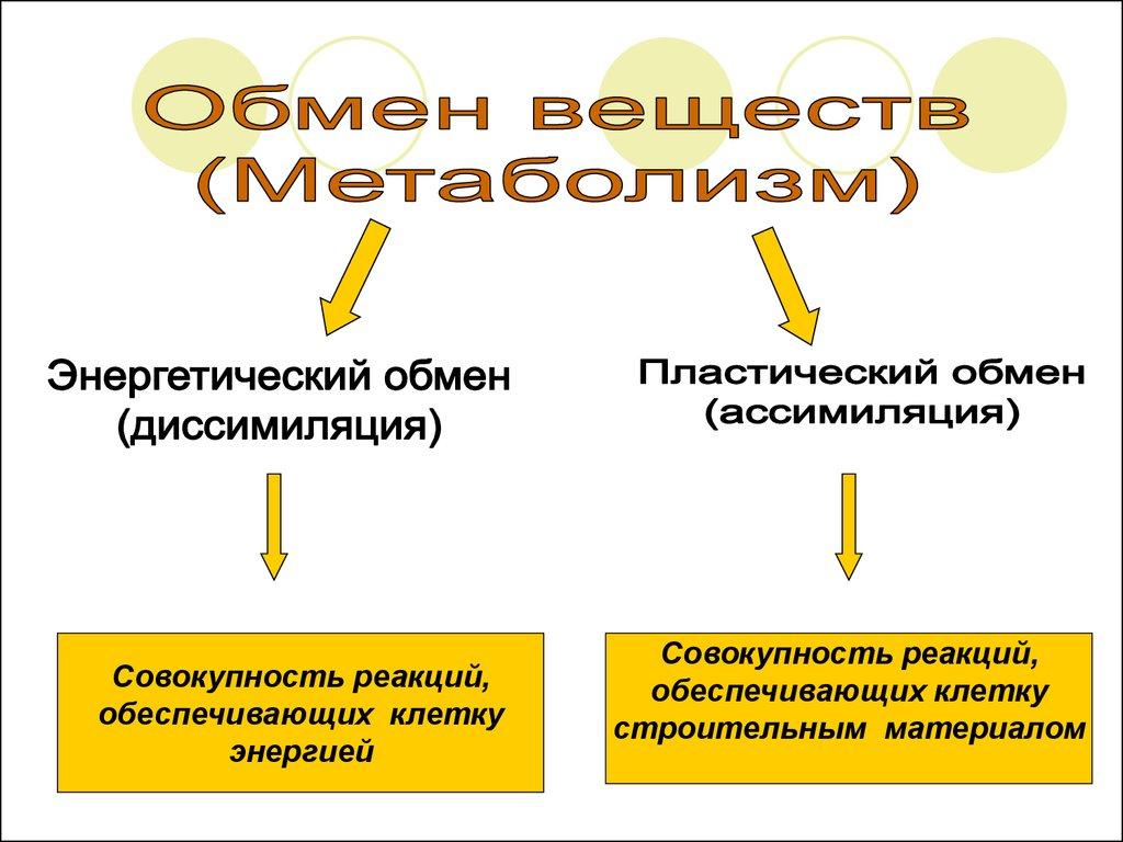 Схема энергетического обмена в клетке фото 289