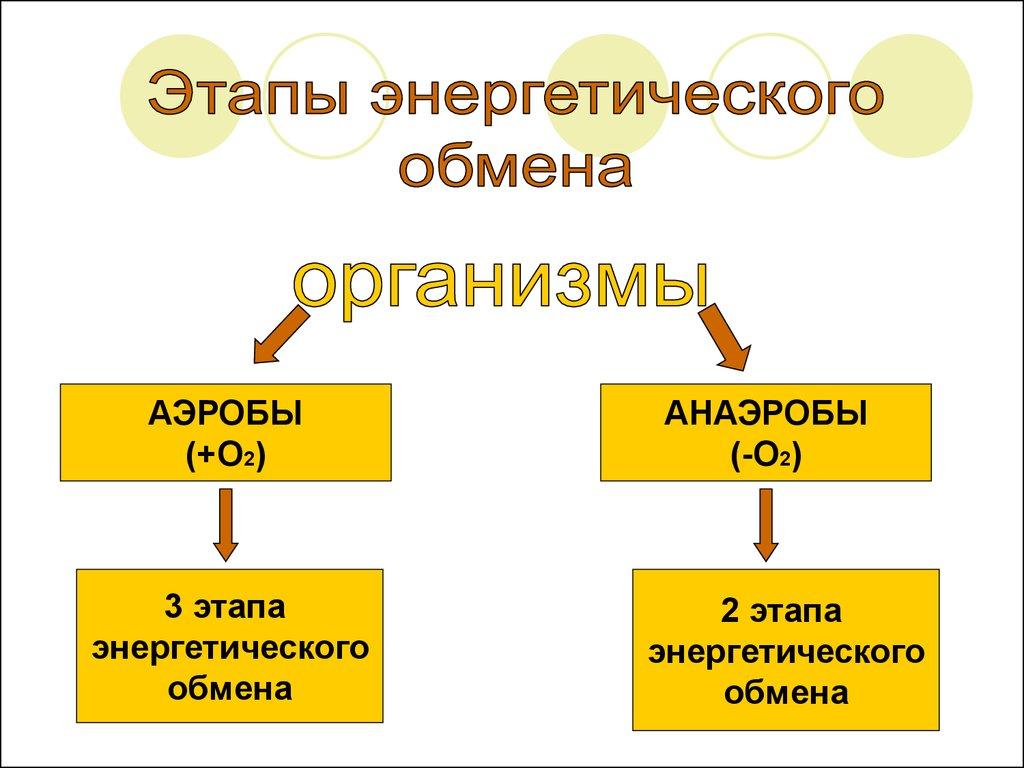 Схема энергетического обмена в клетке фото 616
