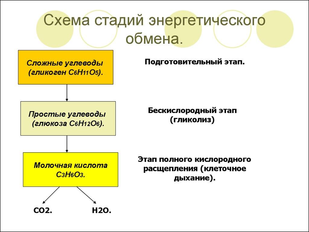 Схема энергетического обмена в клетке фото 944