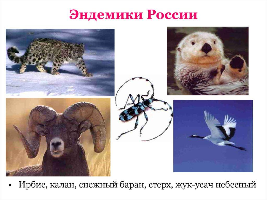 этому эндемики россии животные и растения можете заметить, что