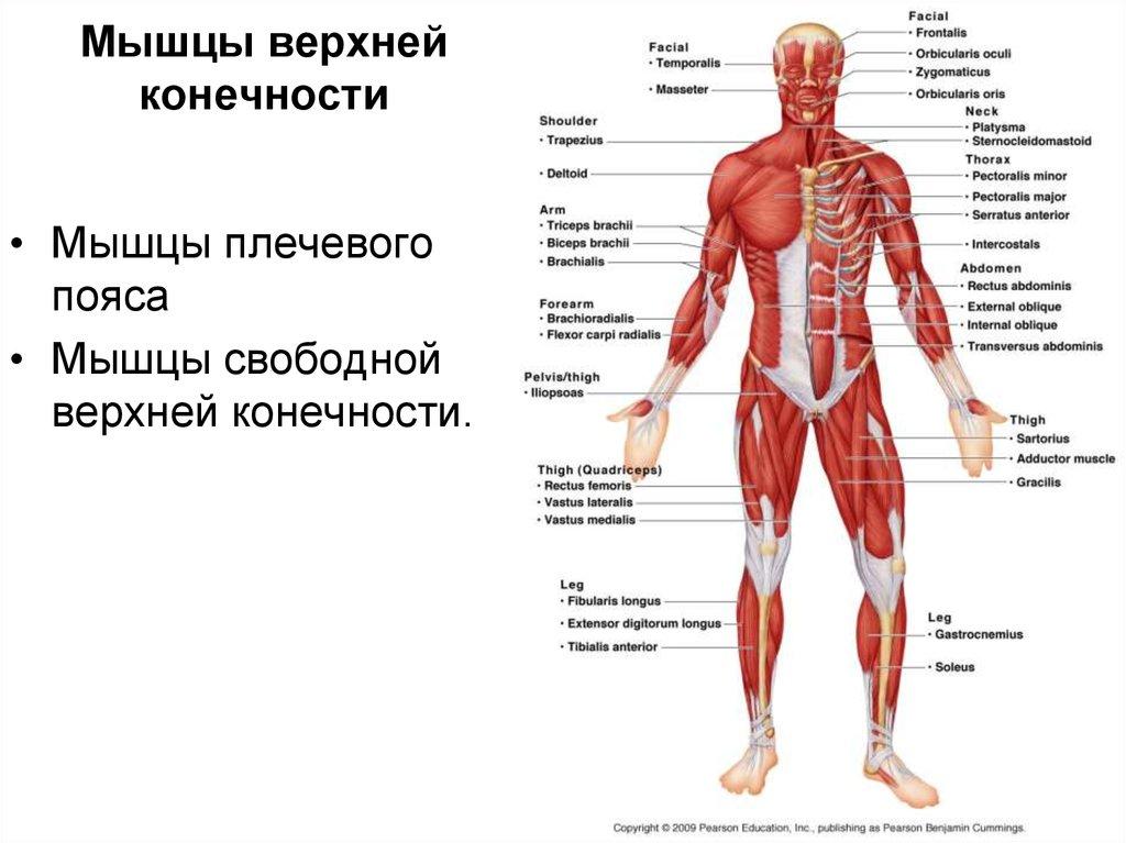 восстановление тканей и суставов по попову