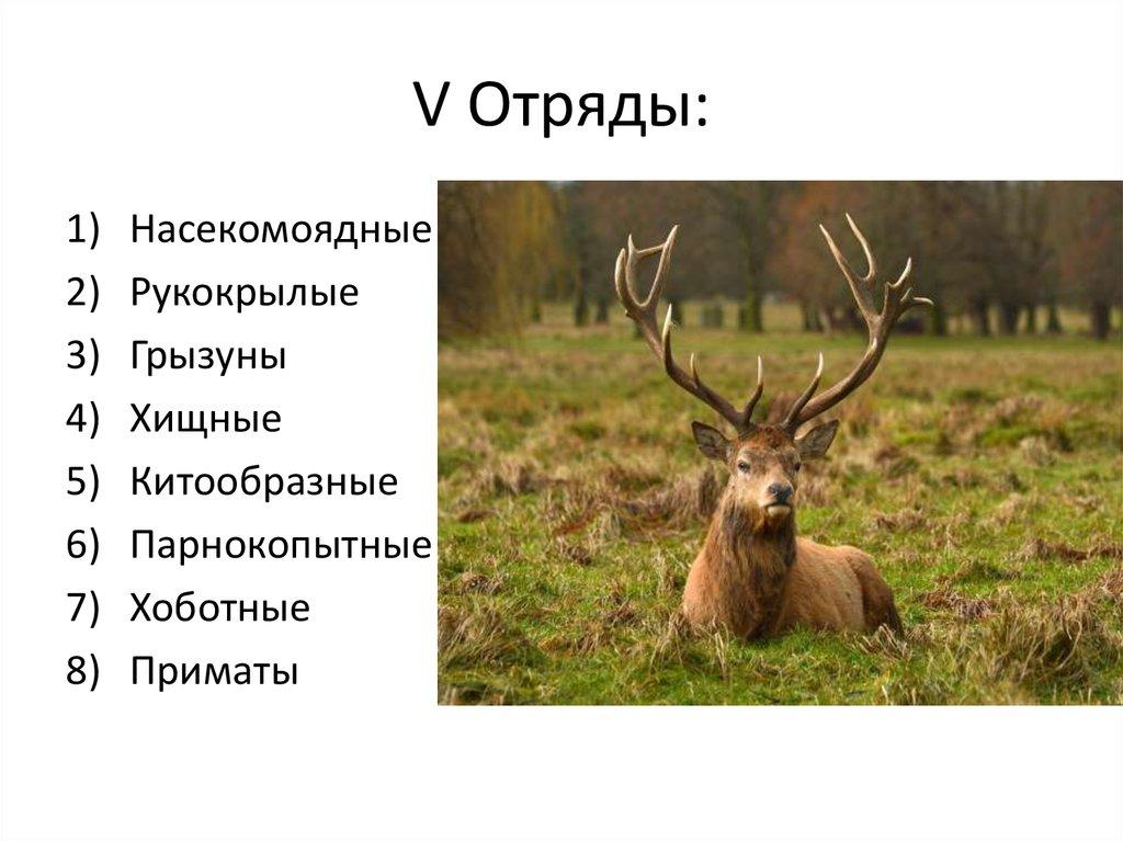 Биологическая систематика - презентация онлайн домен это определение