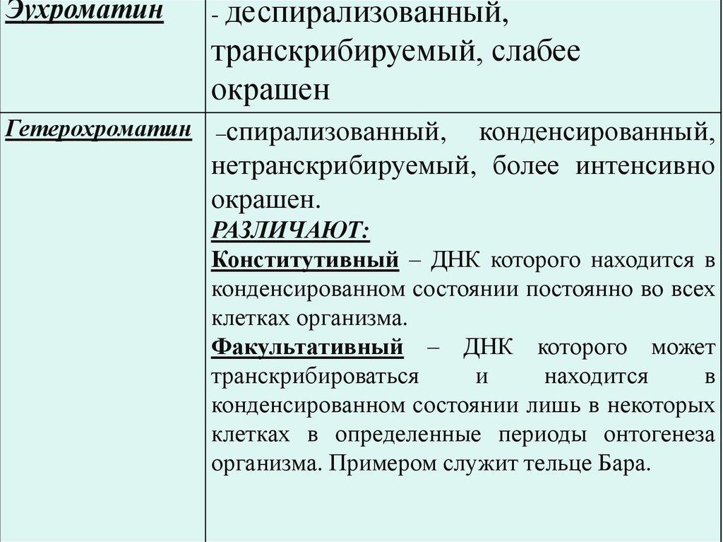 Гетеро хроматин и эухроматин