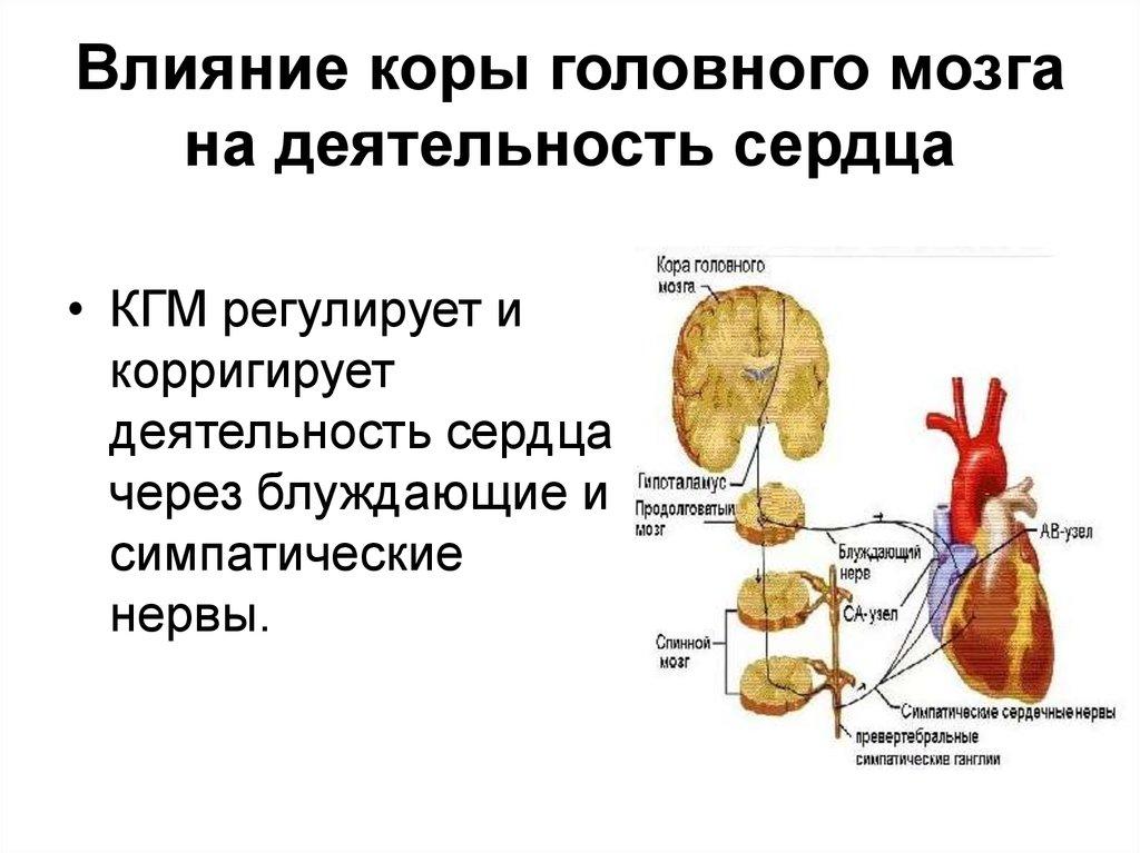 Изменения бэа коры головного мозга регуляторного характера