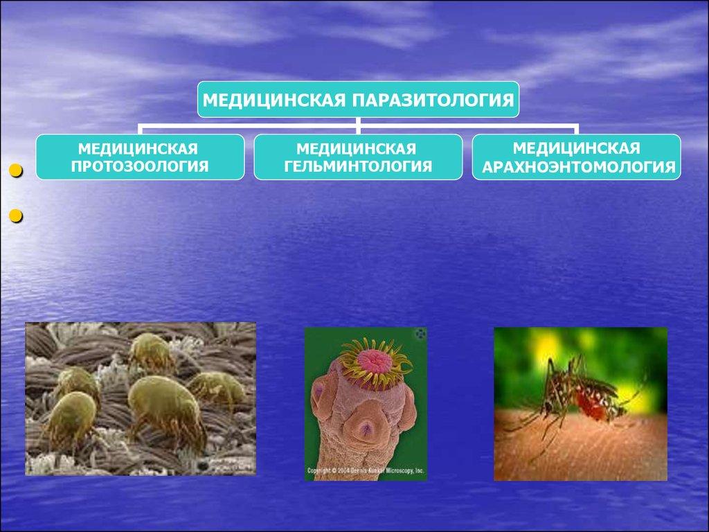 паразиты в клетках человека