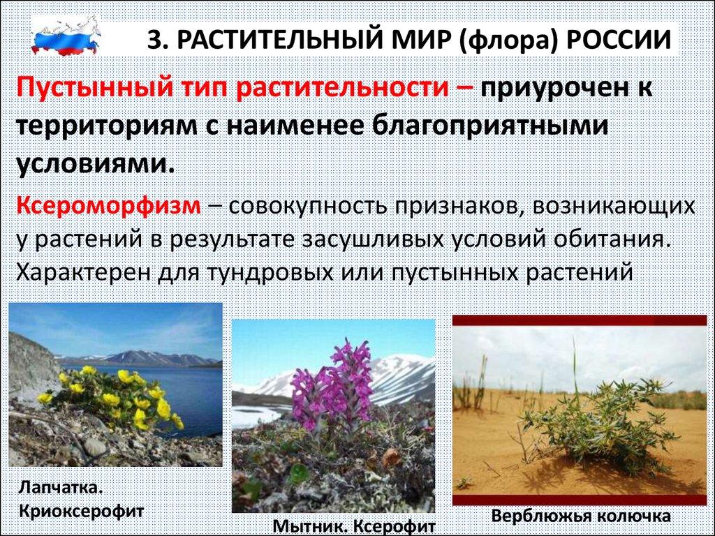 прекрасно флора россии кратко туристические бюро энтузиазмом