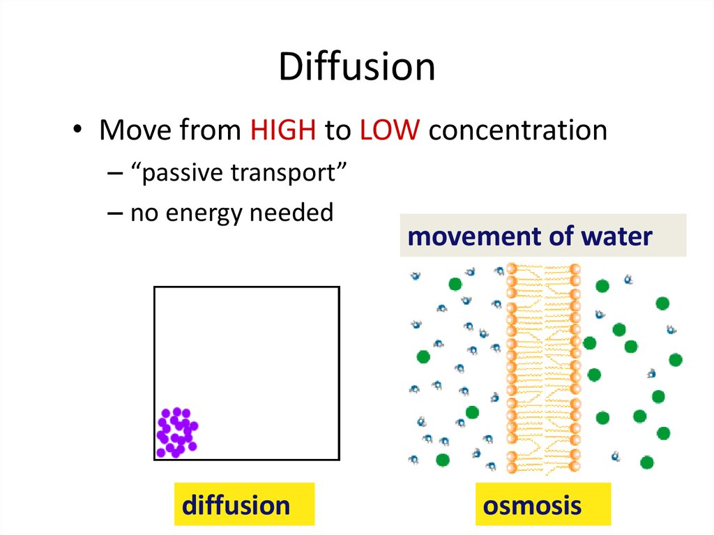 diffusion of osmosis and diffusion What is osmosis osmosis, a type of diffusion, represents the movement of water across a partially-permeable membrane, from an area of high water concentration to an area of low water concentration.